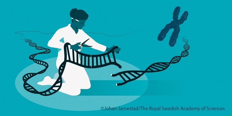 Ilustración Premio Nobel Química (Johan Jarnestad)